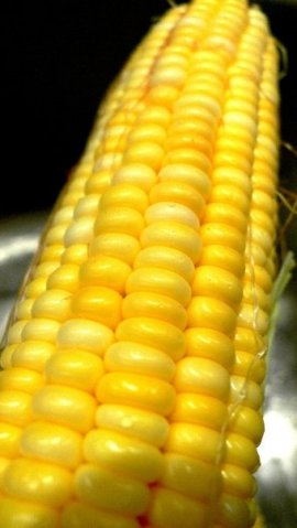 Perfectly ripe Kahuku Corn!